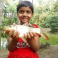 Developing aquaculture